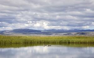 Lómapar á tjörn í Friðlandinu í Flóa.