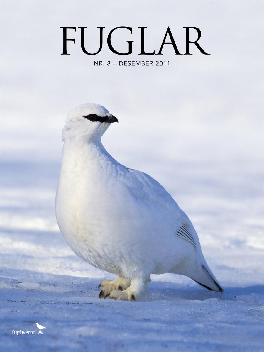 Fuglar8-Cover