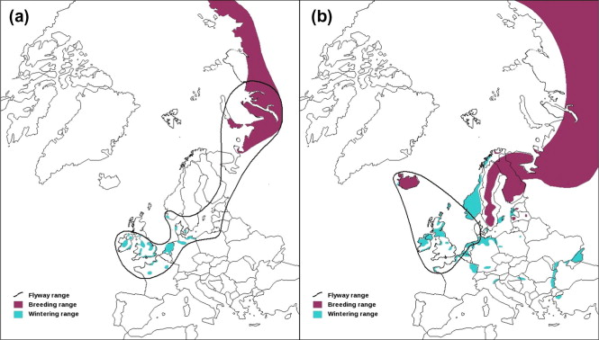 Fig. 1. Distribution of (a) the NW European Bewick's swan population and (b) the Icelandic whooper swan population (from Robinson et al., 2004a, Robinson et al., 2004b).