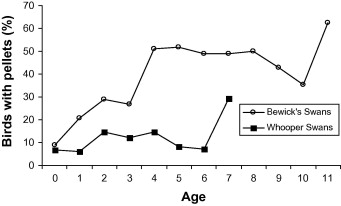 Fig. 3. Percentage of birds with embedded pellets in relation to their age (in years) for Bewick's swans X-rayed between 1970 and 2008 and for whooper swans X-rayed between 1988 and 2007.