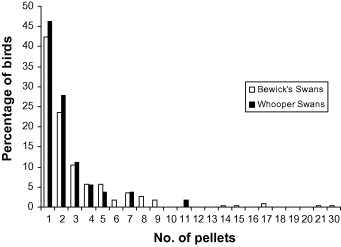 Fig. 4. Pellet count frequency in Bewick's and whooper swans, recorded as the percentage of swans of each species found to at least one embedded pellet.