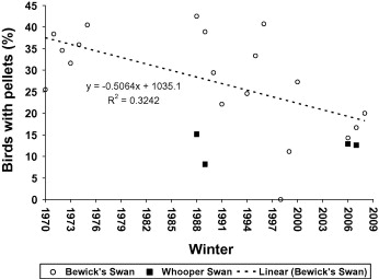 Fig. 5. Incidence of shotgun pellets for Bewick's swans X-rayed between 1970 and 2008 and for whooper swans X-rayed between 1988 and 2007.